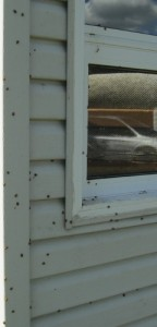 In the fall, our home is covered with ladybugs, inside and out.