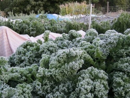 Kale can stand frost.
