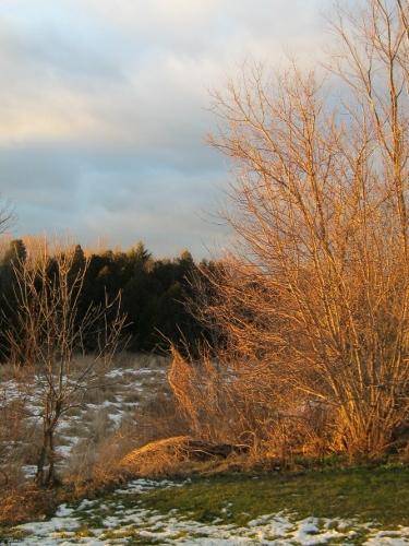 sunlight, even in winter